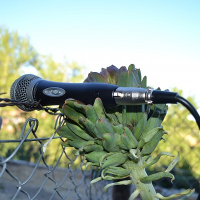 microphone(c)aranrodrivilla